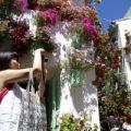 Córdoba se llenará de flores y poesía por los 5 años de los Patios como Patrimonio