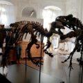 Se subastan dos esqueletos de dinosaurios enemigos en París