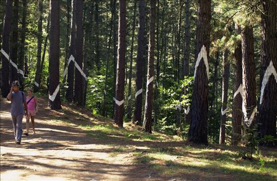 Bosque de Oma- Ibarrola- EFE- 17072013