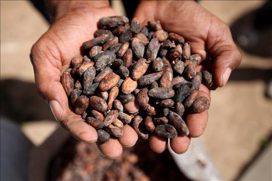 Cacao- Estudio Origen- EFE- 16092013
