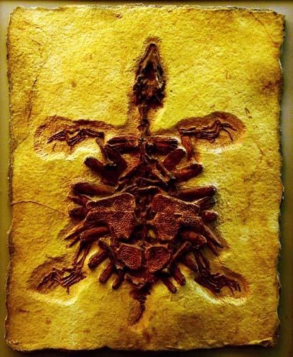 fosil1
