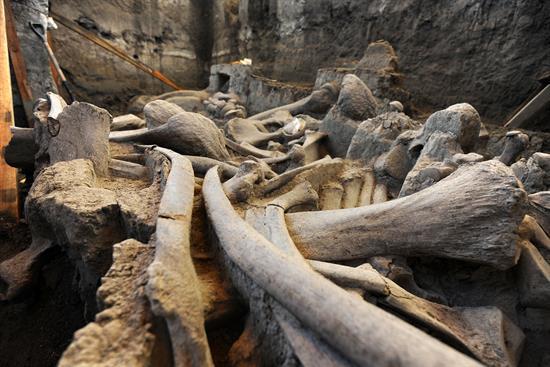 Osamenta del mamut encontrado en México