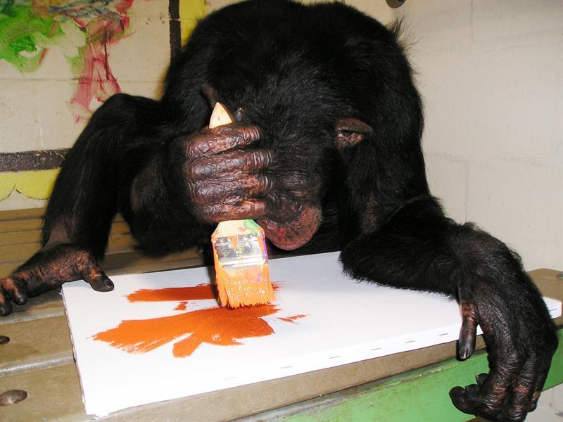 El mundo bajo la mirada de los simios se muestra en una exposición en Miami