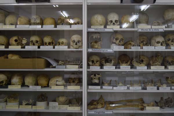 osteoteca de Castilla y León