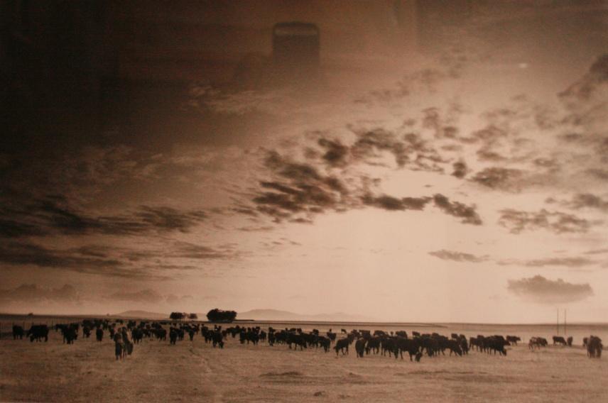 La Escuela de Patrimonio Histórico de Nájera mantiene la exposición fotográfica de Robert Freeman sobre la Trashumancia.